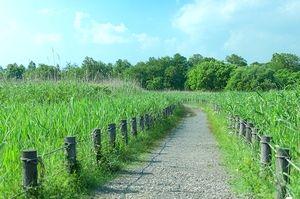 草木の生い茂る遊歩道。