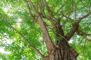 トレニックワールド主催外秩父トレイルランの森林の木々。