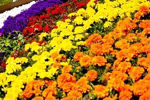 黄色・オレンジ・赤・紫の花が咲き乱れる