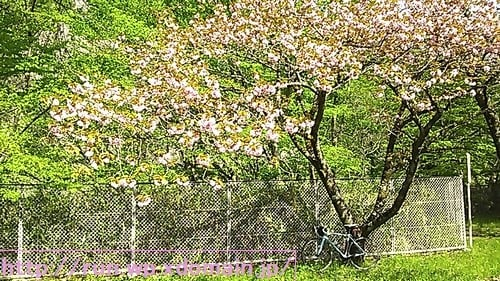 大倉ダム湖畔公園の花