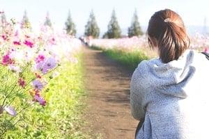 ポニーテールの若い女性が道の両脇に咲くコスモスを鑑賞している。