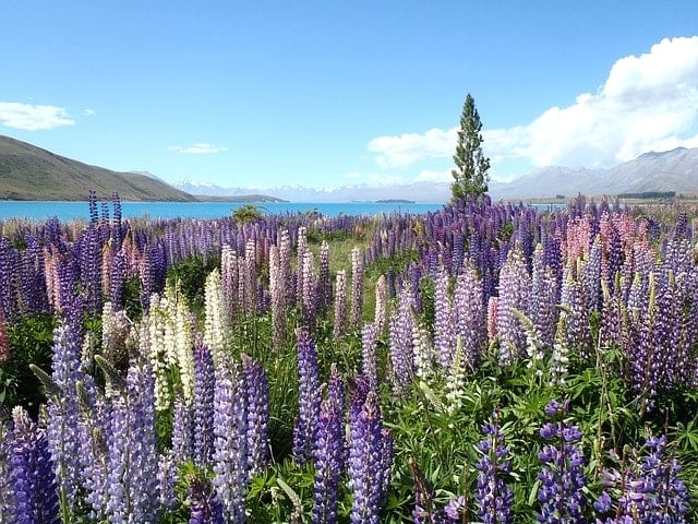 wildflowers-828645_640-min