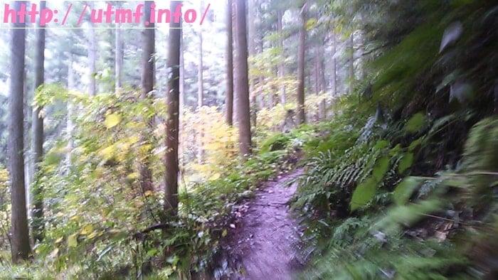 ファントレイルズFT50レインウェア姿で顔振峠から県民の森へ。