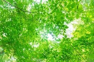 晴れの日の木漏れ日
