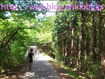 埼玉県外秩父トレイルラン43のコース内森林。