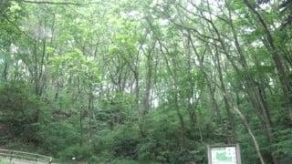 アミノバリューランニングクラブの2回目は台原森林公園で起伏走。