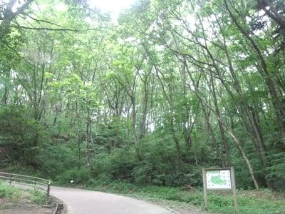 森林公園内でトレイルランニングのトレーニングをする。