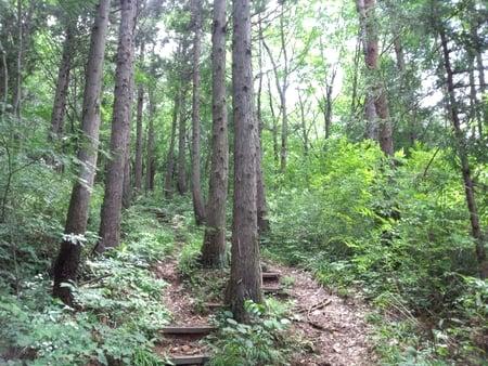 森林の中をトレイルランニング