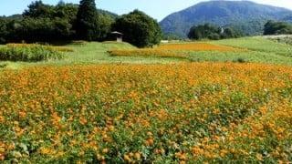 山形県の面白山と天童高原でトレイルランニングで使うストック練習。