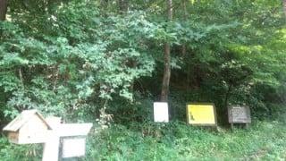 仙台泉ヶ岳トレイルラン距離短縮と青葉の森緑地でのトレーニング。