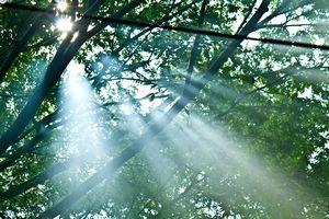 新緑の季節、木々の間から木漏れ日が傘している山の画像。