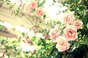 UTMFとハセツネCUPのトレーニングコースに咲くピンク色の花。
