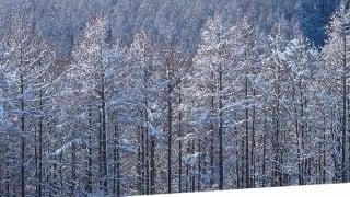 田部井淳子エベレスト女子初登頂「人生山あり谷あり」登山家の本。