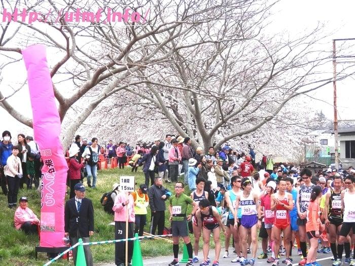 柴田桜ハーフマラソンは満開の桜を見る花見ランニングで土曜日開催。